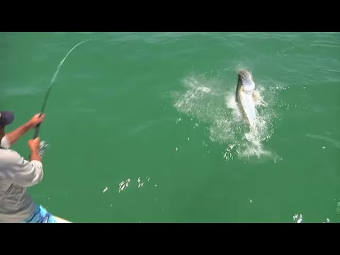 ADOS Addicted to Fishing Season 3 Ep 1 from YouTube · High Definition · Duration:  23 minutes 17 seconds  · 12.000+ views · uploaded on 10.05.2016 · uploaded by ADOS Addicted To Fishing