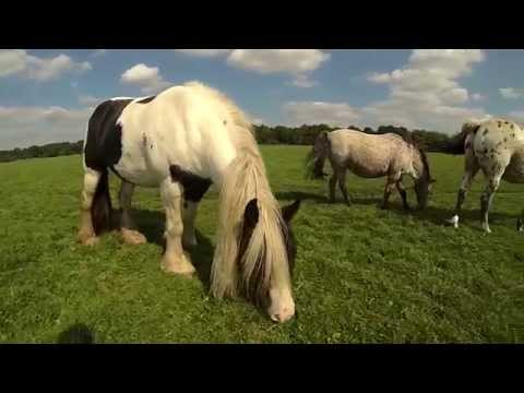 Horses on Port Meadow - Oxford