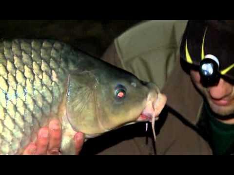 рыбалка прикорм для плотвы