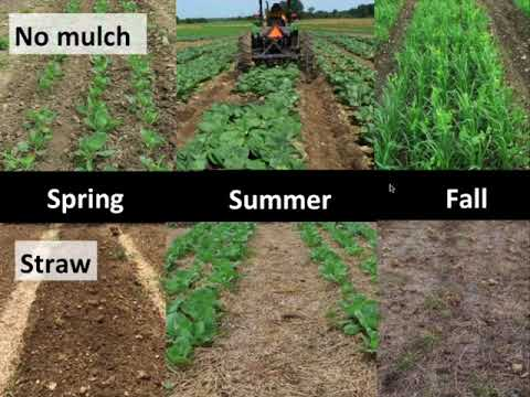 Comparison of Reduced-tillage Practices for Small-scale Organic Vegetable Production