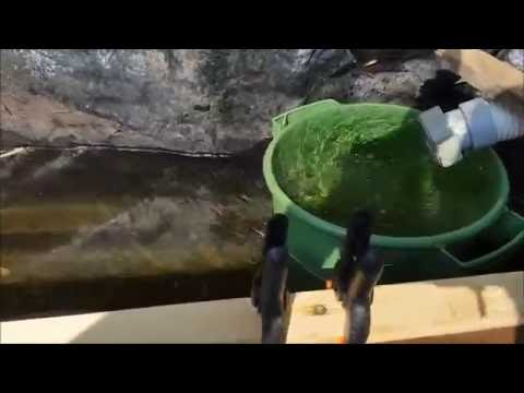 Aquaponics, airlift pump from scraps and pond update