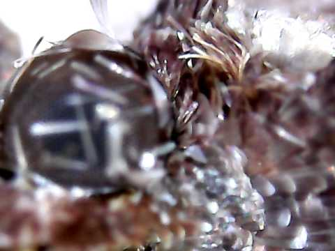 Моль в предсмертной агонии под микроскопом 20x - 800x 2MP USB Digital Microscope