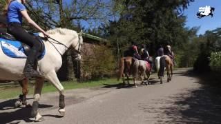 Promo Bungalowpark camping de Witte Wieven