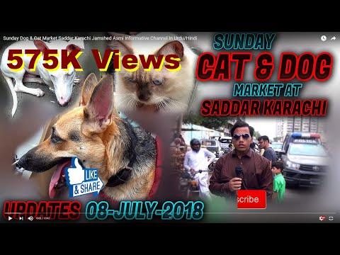 Sunday Dog & Cat Market Saddar Karachi Jamshed Asmi Informative Channel In Urdu/Hindi