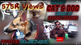 Sunday Dog And Cat Market Saddar Karachi Jamshed Asmi  Nformative Channel  N UrduHindi