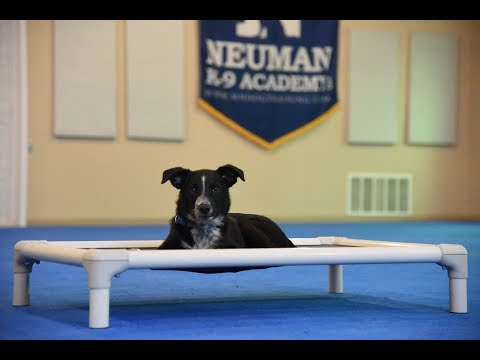 Boots - Puppy Camp Dog Training Video Demonstration