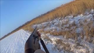 Охота на шакала в станице Староминской(Охота с гончими на шакала в станице Староминской 10.01.2016 г., 2017-01-04T18:15:50.000Z)