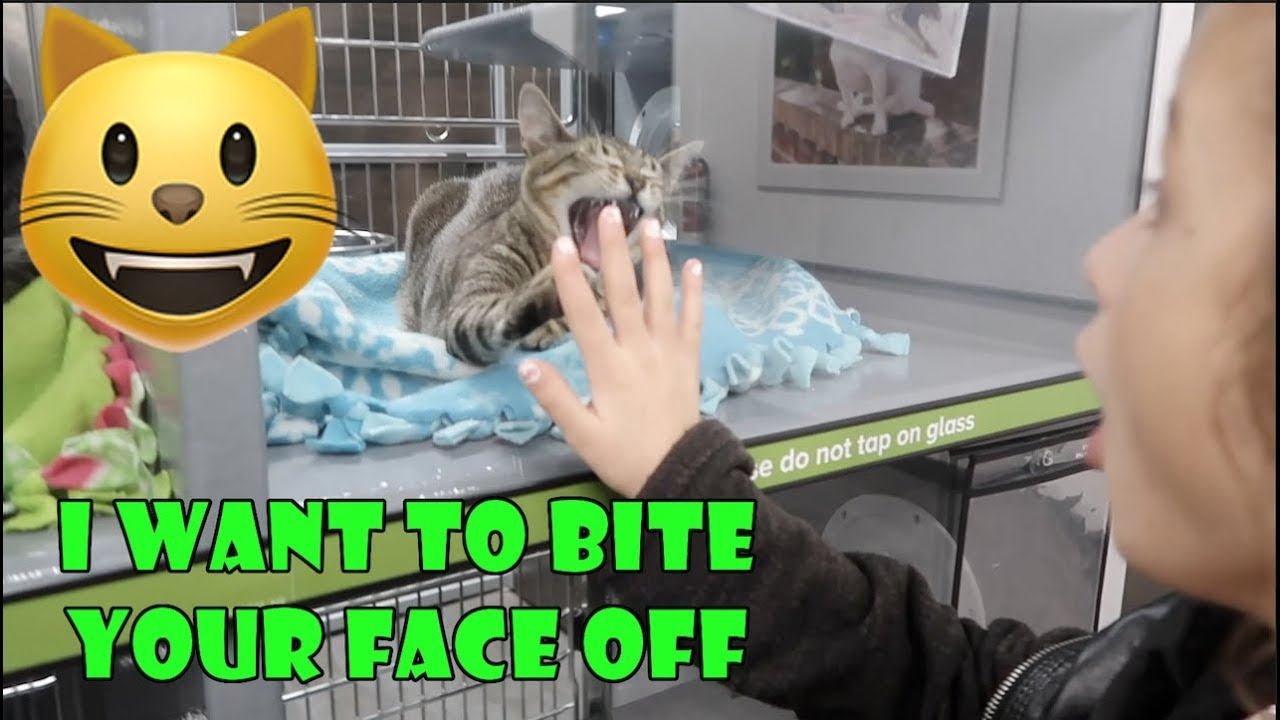 I Want to Bite Your Face Off 😺 (WK 350.1) | Bratayley