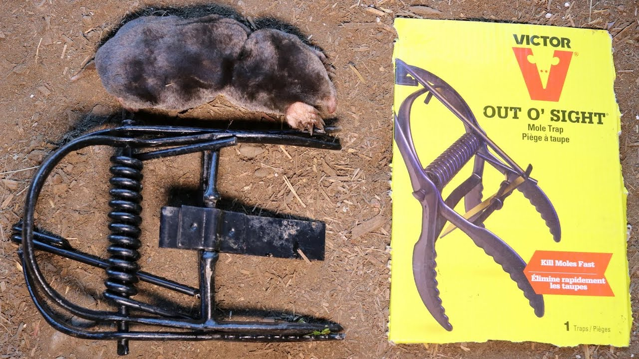 The Victor Out O Sight Mole Trap In