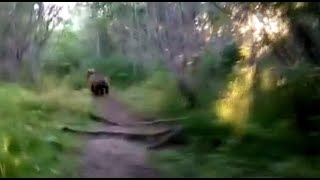 Catch 'em ALL: Russian films himself chasing bears in the wild