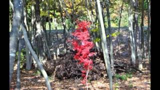 きずなの森晩秋/そして葉桜の時