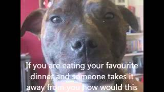 Dogs Are Family Too - Sheldon The Staffie - Short Guide For Children And Parents  (education)