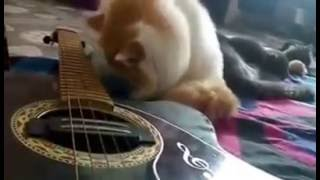 subscribe us for the cutest cat videos. paws N claws is a home of 2...