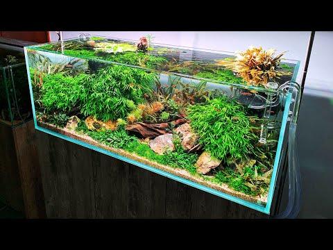 Beautiful 125 gallon Aquascape Aquarium Gardens