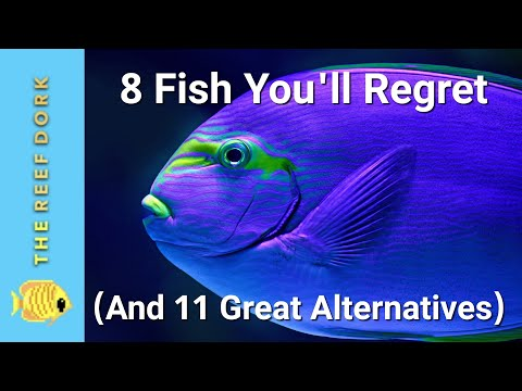 Top 8 Fish You'll Regret (And 11 Great Alternatives)