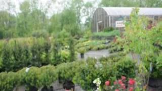 We plant Delightful Rose Bushes  Gardens Delights In Bucks County