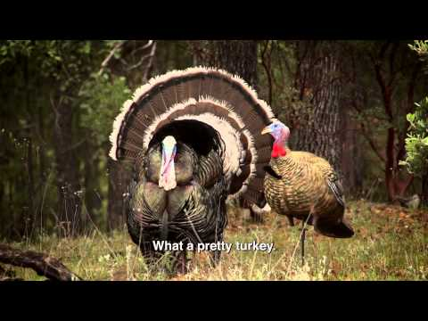 Team Trophy Quest Full Episode: Gould's Turkey, Mexico - TQ