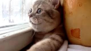 О чем думают коты, приколы, смешное  про котов и кошек.