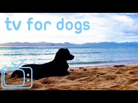 Dog TV! Miami Beach Walk Videos for Your Dog to Enjoy! NEW!