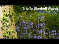 Trip To Bluebell Woods (including short guided story example) Vlog: Arundel, West Sussex