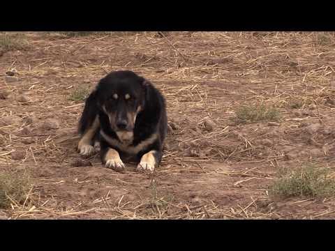 видео: Аборигенные САО Таджикистана   Саги Дахмарда из Кабадияна, кишлак Чимгилиш