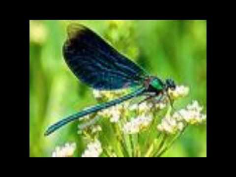 Paul McCartney & Wings - Little Lamb Dragonfly