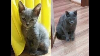 Котёнок из приюта, спустя 14 месяцев