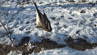 Охота на птиц сетью Ловля зяблика Орнитологическая сеть с Китая Проверка