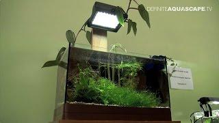 Little Big World of Aquarium - Heterandria formosa (pt.2)