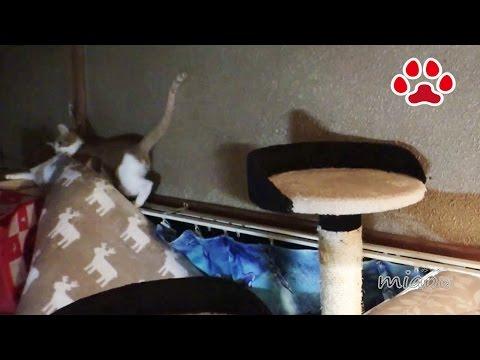 猫の趣味かみふみ【瀬戸のまや日記】Cat's hobby? overturn soft mats【Cat's room Miaou】