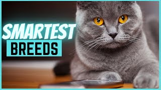 Top 5 most intelligent cat breeds (you wouldn't believe!)