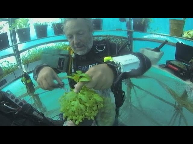 Italy: Underwater agriculture growing basil, lettuce and strawberries