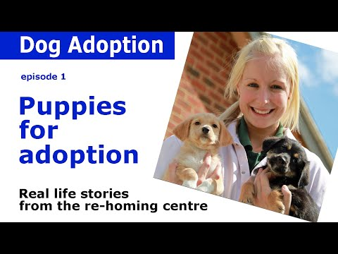 Dogs Trust Documentary - Episode 1