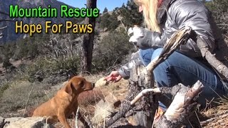 Hope For Paws: mountain rescue of three scared dogs - Ginger...