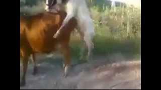 funny animal sex