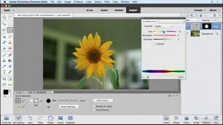 Selections and the selection tools | Learning Photoshop Elements 15 | LinkedIn Learning