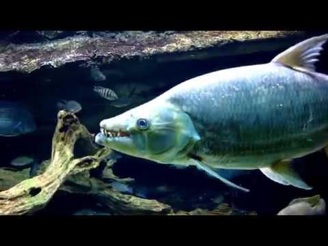 【白金】白金猛魚 – TouPeenSeen部落格