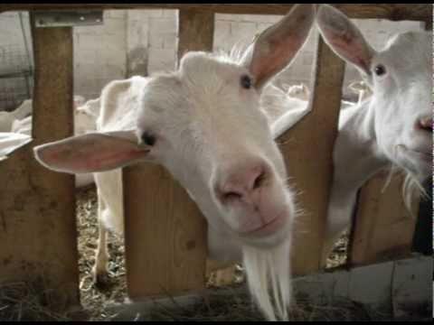 Animali della youtube for Piani di riproduzione della fattoria
