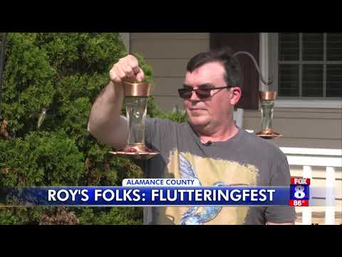 Alamance County home becomes hot spot for hummingbirds