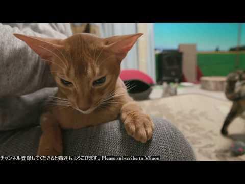 2018.7.19 猫日記   Cats & Kittens room 【Miaou みゃう】