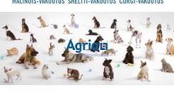 Agria Koirarotuvakuutus | Agria Eläinvakuutus