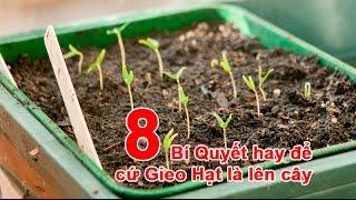 8 Bí Quyết hay để cứ Gieo Hạt là lên cây