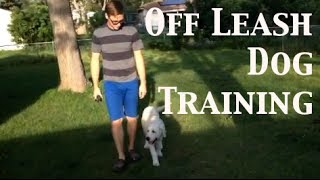 How To Train Any Dog To Walk Off Leash - Dog Training In Denver