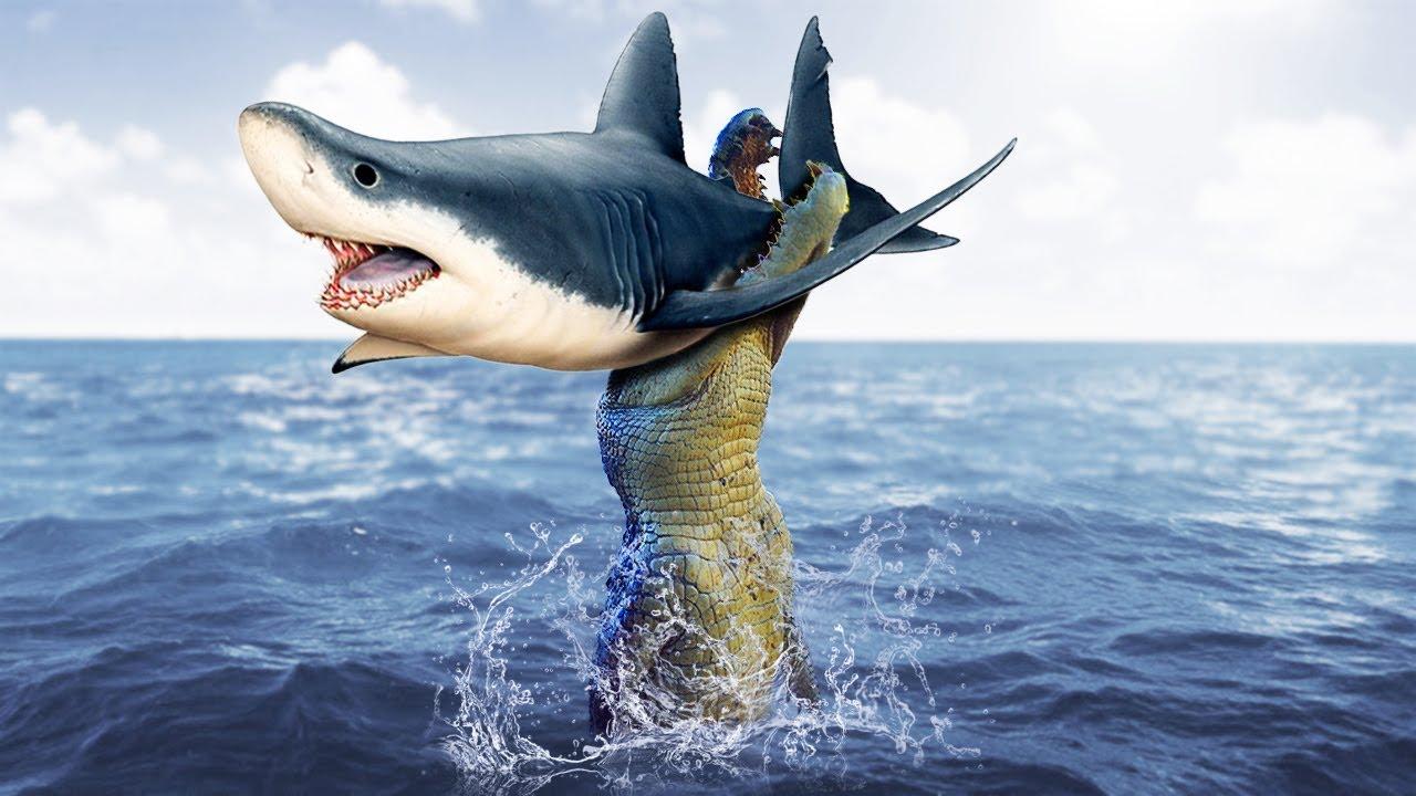 Angry Crocodile Hunting Shark Under The Sea