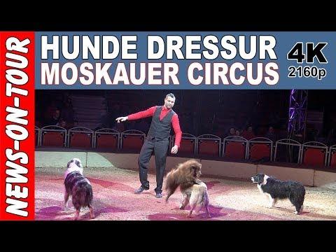 Witzige Hunde Show! Hundedressur (4k) Hundetricks mit Robano Kübler | Moskauer Circus | Zirkus Show