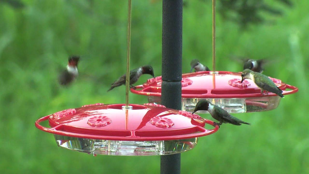 amazing smal unlimited high wild photos june house ks nyjer birds feeder purple resolution feeders topeka bird