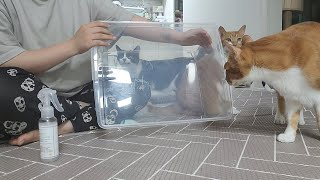 고양이 모래 갈이 강추템 캣츠쉴드 플러스를 소개합니다!