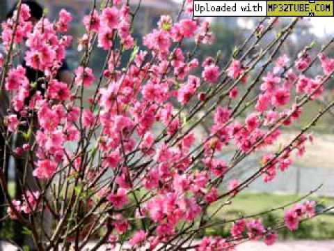 Mùa Xuân Đến Rồi Đó - Thanh Hoa