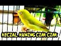 Masteran Suara Ngejos Gurun Sahara Sang Lengendaris Kecial Kuning Lombok  Mp3 - Mp4 Download