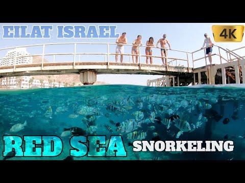 EILAT ISRAEL RED SEA SNORKELING 2020 4K GOPRO 7